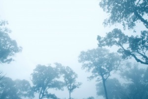 Cutting Through the Fog of Business